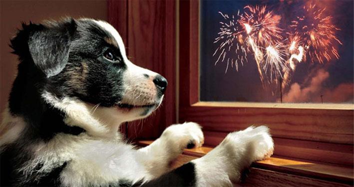 Fogos de artifício silenciosos deixam veterinários e amantes de animais mais tranquilos