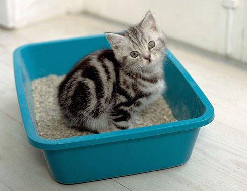 Quantidade correta de caixas de areia para cada gato