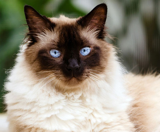 Mostra de gatos é atração para o fim de semana em Curitiba