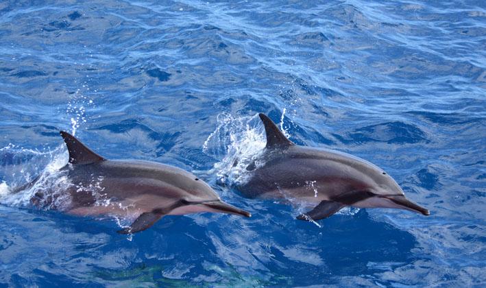 Projeto da Petrobras registra 27 espécies de baleias e golfinhos na Bacia de Santos