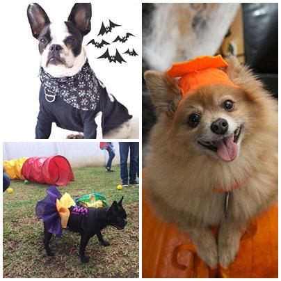 Shopping promove Halloween Pet e concurso para escolher a melhor fantasia