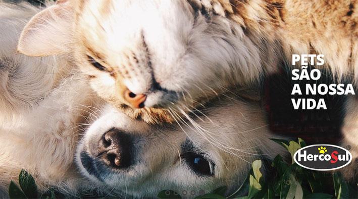 Dicas de especialista sobre obesidade Pet