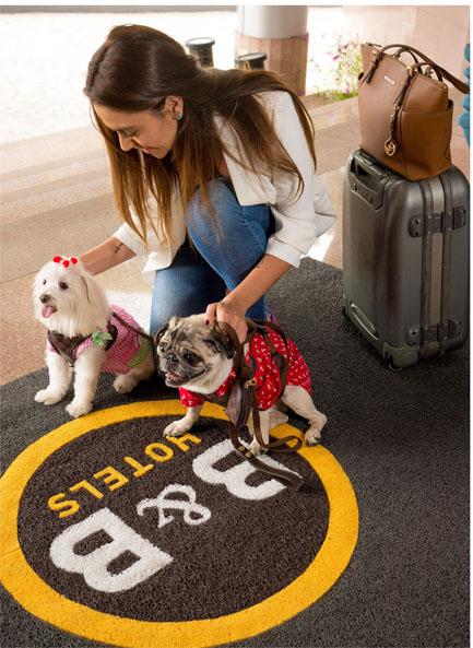 Hotéis abrem as portas para os animais de estimação e atraem turistas