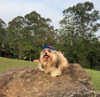 Hotel Terras Altas é opção para viajar com pet no Aniversário de São Paulo
