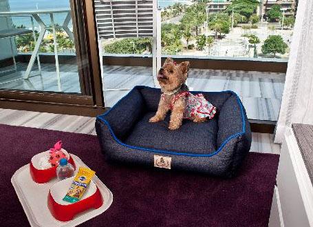 10 hotéis para quem quer viajar com seu animal de estimação