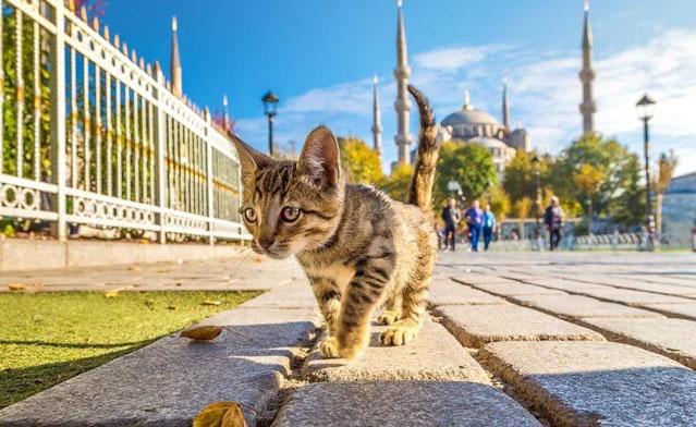 Istambul, a cidade onde os gatos são os donos de tudo