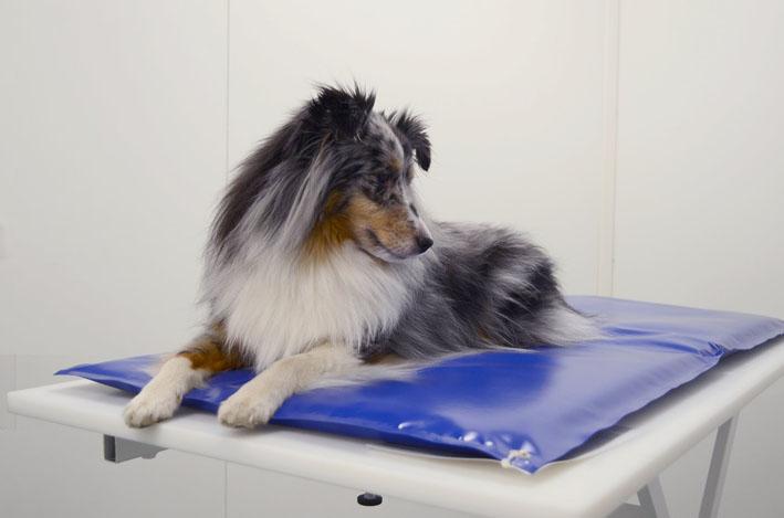 Saiba como a medicina preventiva veterinária pode salvar a vida do seu pet