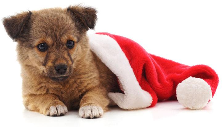 Espírito de Natal invade pet shop neste final de semana
