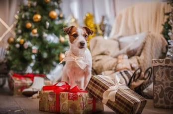 Cães e gatos também merecem presentes de Natal