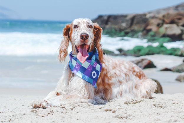 Novembro Azul: prevenção também vale para pets