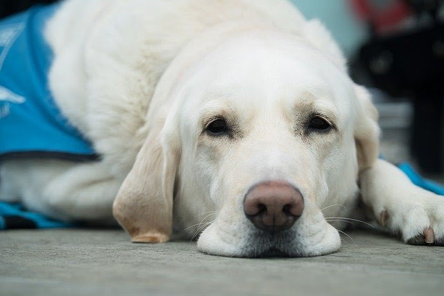 Raiva Canina: vamos falar sobre essa doença fatal?