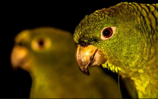 Ilhabela comemora sucesso do Festival de Aves
