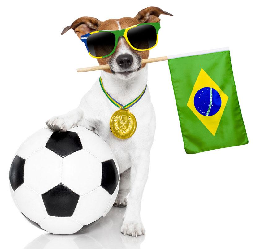 Animais de estimação e tutores podem torcer juntos pelo Brasil