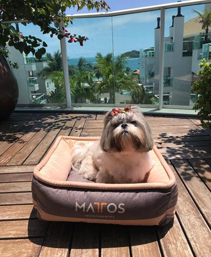 Verão: nessas férias leve seu cão para a praia