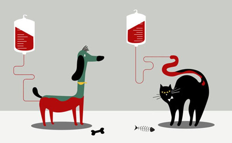 Você sabia que seu pet pode doar sangue?