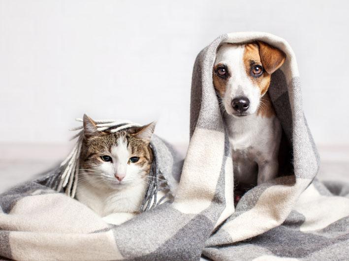 Pets sentem mais fome no inverno?