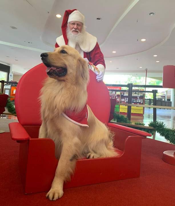Pets terão encontro com o Papai Noel no Iguatemi Campinas e no Galleria Shopping