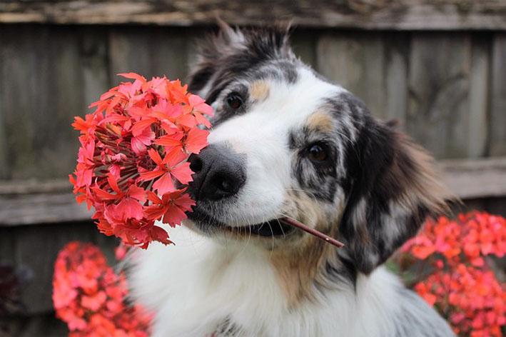 Conheça as plantas venenosas para seu cãozinho
