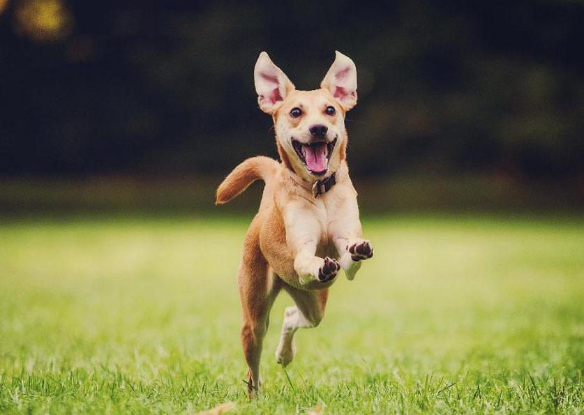 O que são prebióticos e probióticos e como podem ajudar na saúde do cão