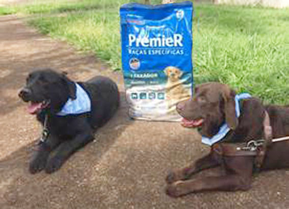 24 de abril - Dia Internacional do Cão-Guia
