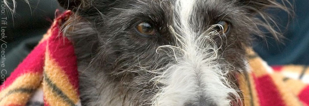 Proteção Animal Mundial dá dicas de como proteger seu pet do frio