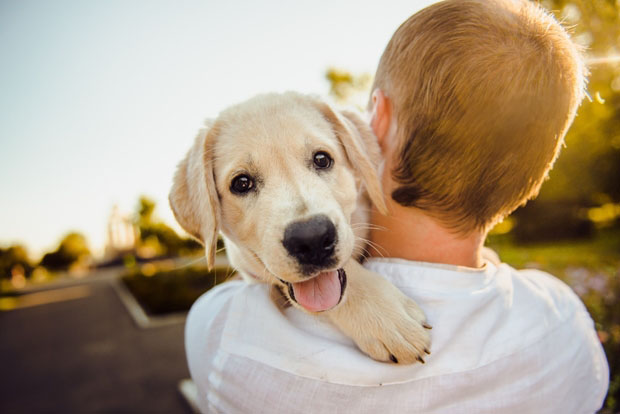 Animais de estimação encantam até o mercado de seguros
