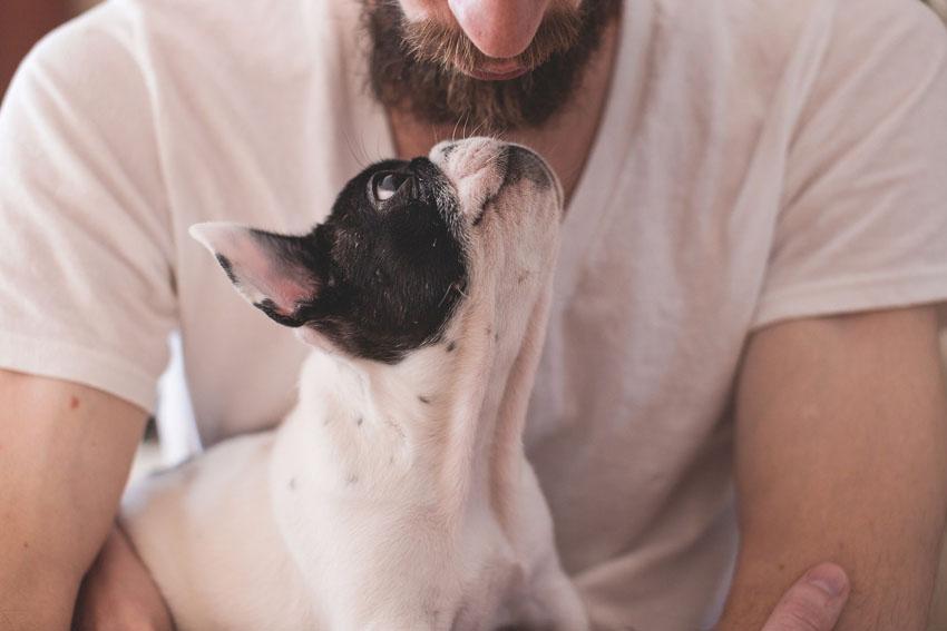 Seguro para pets equivale a 50% das contratações de planos de saúde