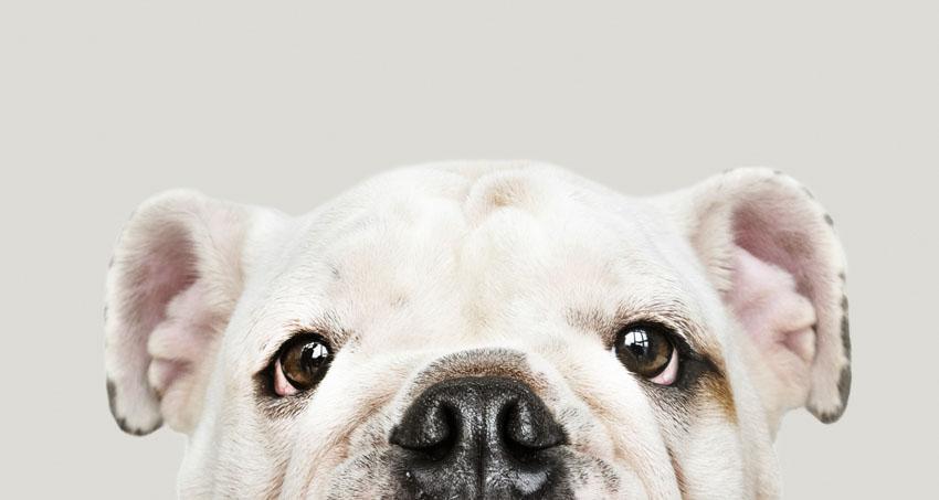 Mudança na rotina afeta saúde e comportamento dos pets