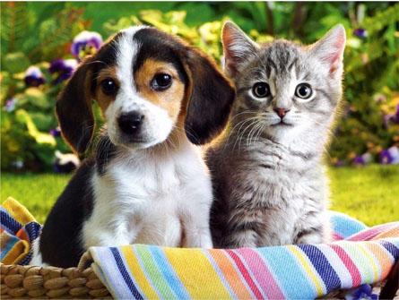 Strix realiza curso gratuito sobre cuidados com filhotes de cães e gatos