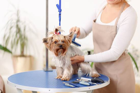 Pet shop, um mercado em constante evolução