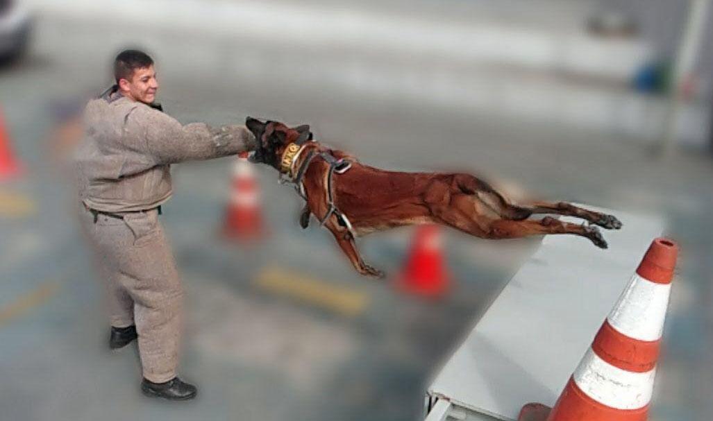 Campinas recebe sábado (12), o Torneio de Cães Especiais da Polícia
