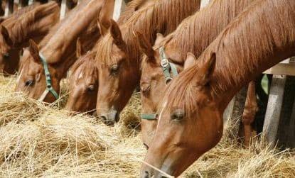 Como detectar úlceras gástricas em cavalos?