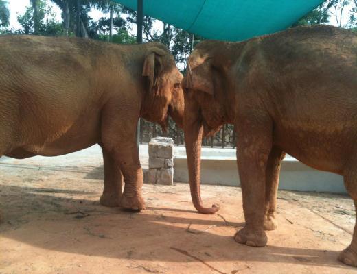Vetnil apoia transporte de elefantes de Santa Catarina para o zoo de São Paulo