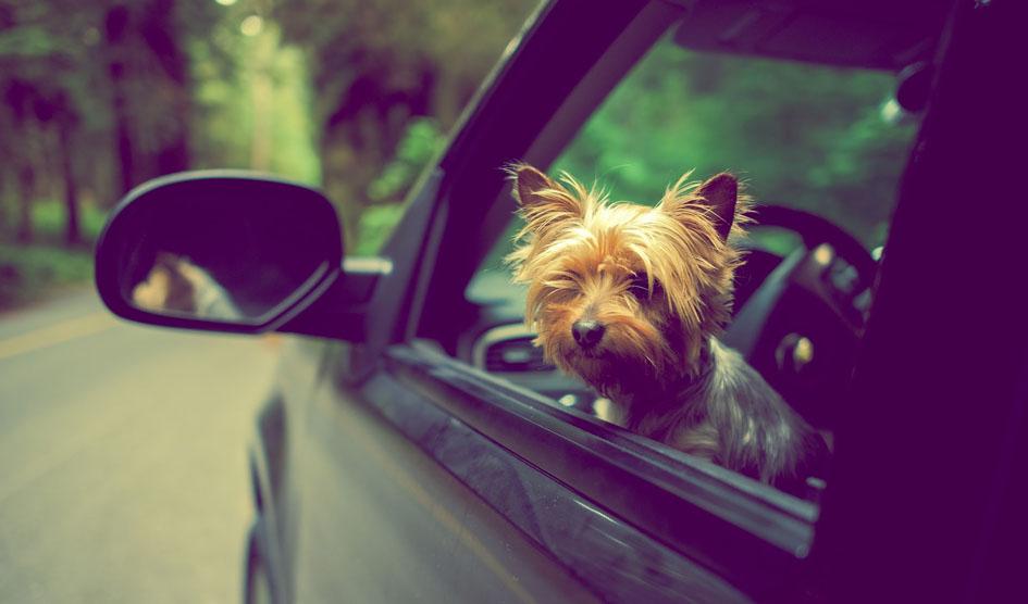 Vai viajar com o pet nas férias?