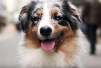 Descubra o que seu cão sempre quis dizer a você, no vídeo da Equilíbrio