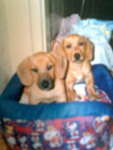 Layla e Ralph